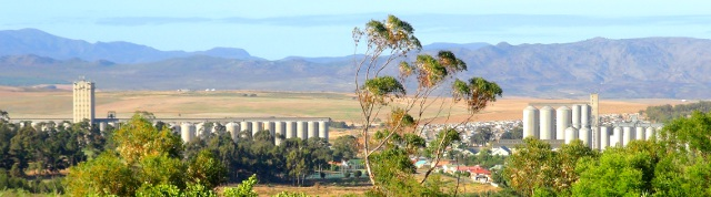 Caledon South Africa  city pictures gallery : ... prefer the green look, then visit Caledon when the canola is growing