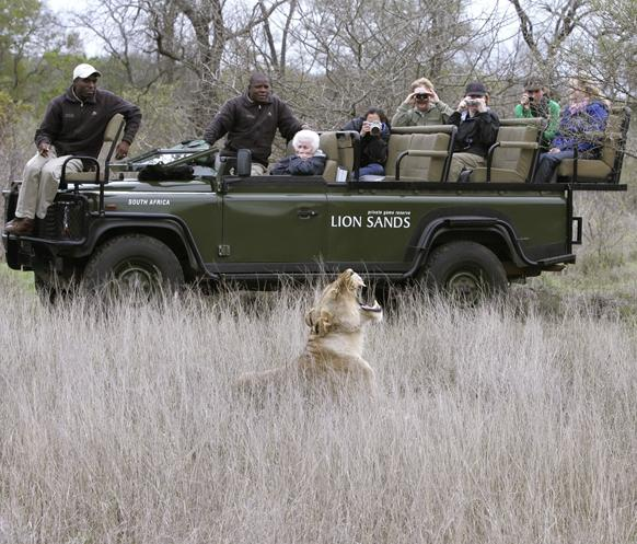 a game drive at the Lion Sands Lodge