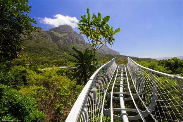 New Aerial walkway at Kirstenbosch Botanical Gardens