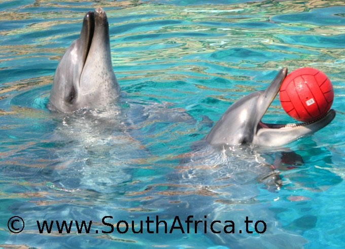 images of dolphins playing - photo #36
