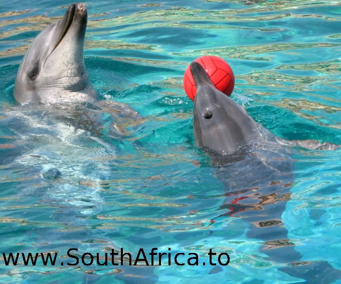 images of dolphins playing - photo #33