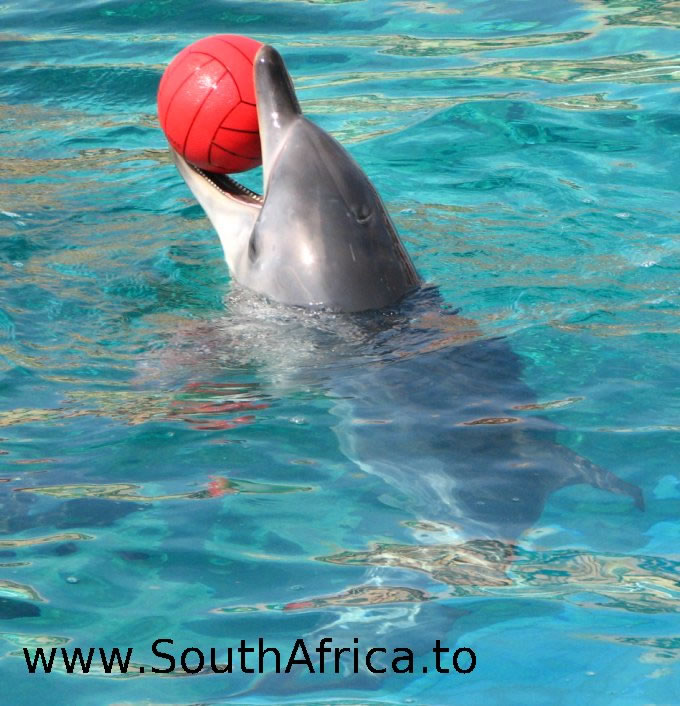 images of dolphins playing - photo #30