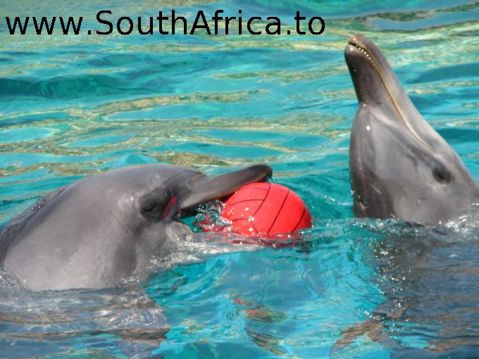 images of dolphins playing - photo #9