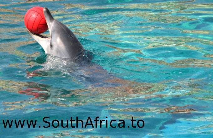 images of dolphins playing - photo #49