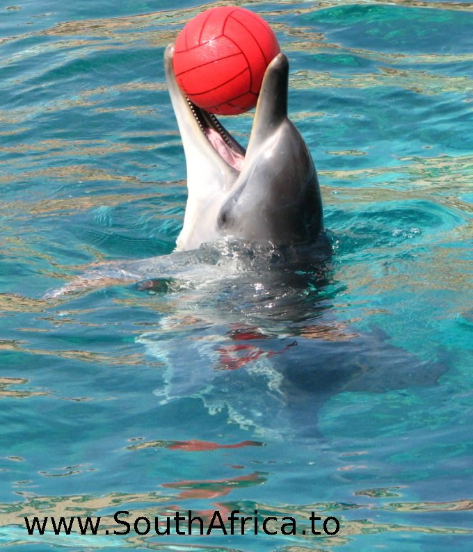 images of dolphins playing - photo #10