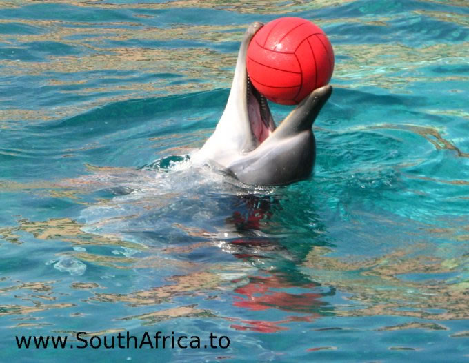 images of dolphins playing - photo #38