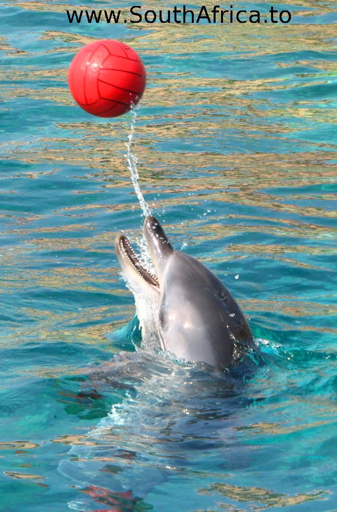 images of dolphins playing - photo #11