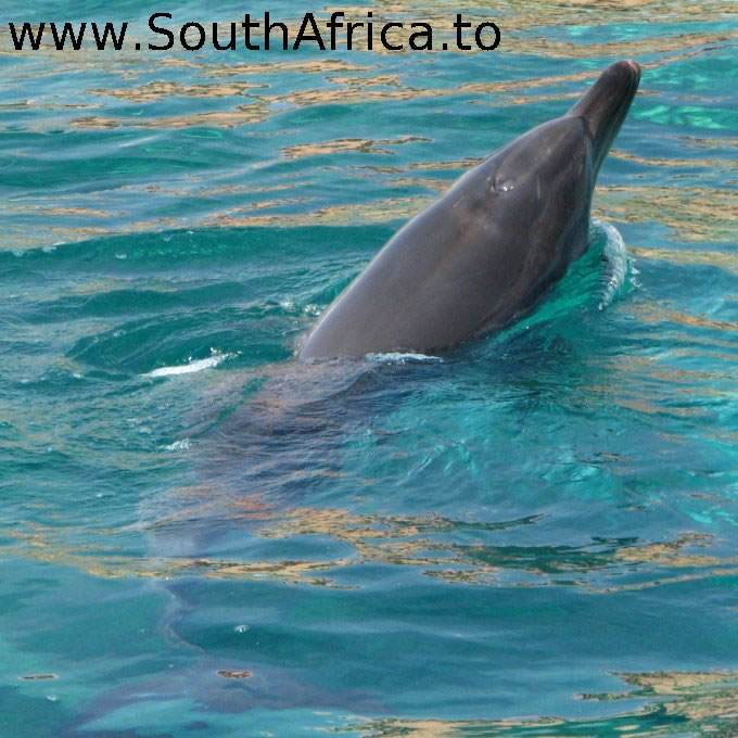 images of dolphins playing - photo #12