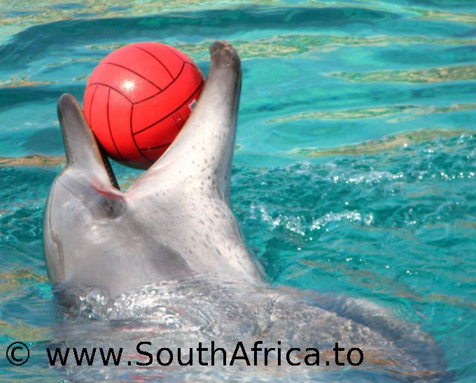 images of dolphins playing - photo #39