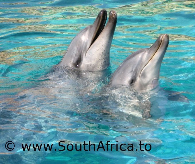 images of dolphins playing - photo #14
