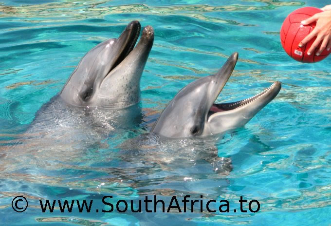 images of dolphins playing - photo #25