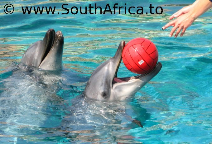 images of dolphins playing - photo #40