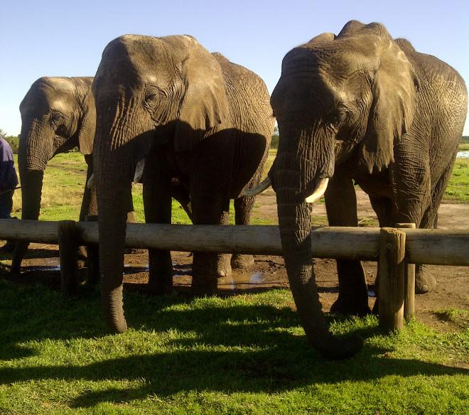 Elephant Sanctuary at Plettenberg Bay