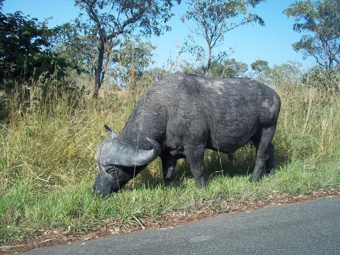 Image Result For Car Hire Kruger Skukuza