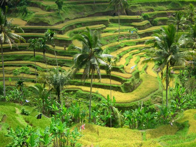 farmlands in Indonesia